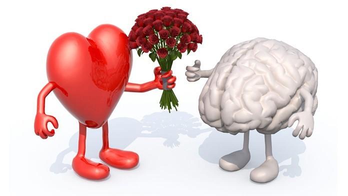 ndjenja e dashurisë