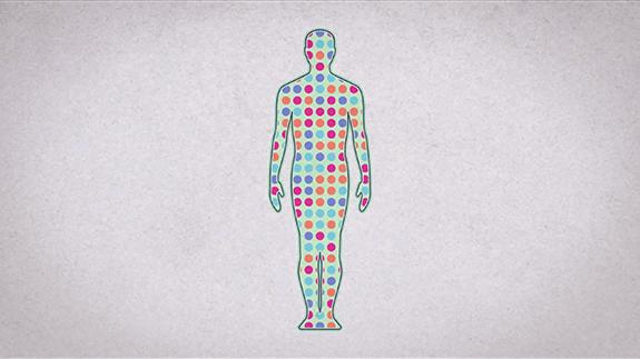 fakte për trupin