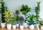 bimët